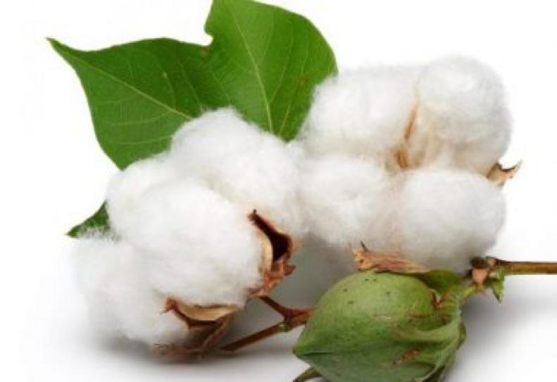 China's cotton